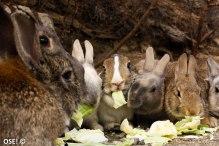 un festin de salade, regardez moi ces ptites bouilles trop heureuses.