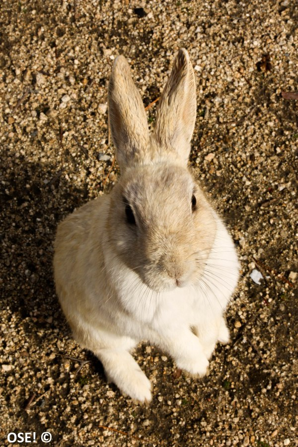 voilà la technique ultime du lapin pour avoir des croquettes : il se met sur ses ptites pattes arrières, il vous regarde avec ses ptits yeux de lapin trop mimi et croisant ses petites mimines. Et croyez moi qu'il en a eu des croquettes, plutot 2 fois qu'une...