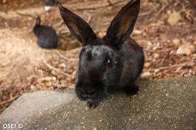 Le gang des lapins noirs (si un jour je fonde un gang de bikers je l'appellerai comme ça)