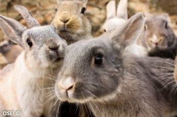 Si des lapins faisaient un album de rap, voilà à quoi j'imagine que ressemblerait la jaquette.