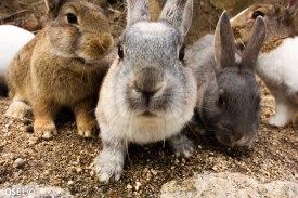 baston de regard avec un lapin soutenu par son crew.