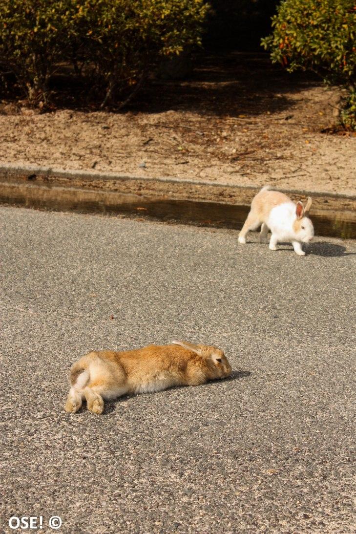 Parce qu'il y a aussi de temps a autre des lapins repus qui n'en ont rien à foutre de nous.